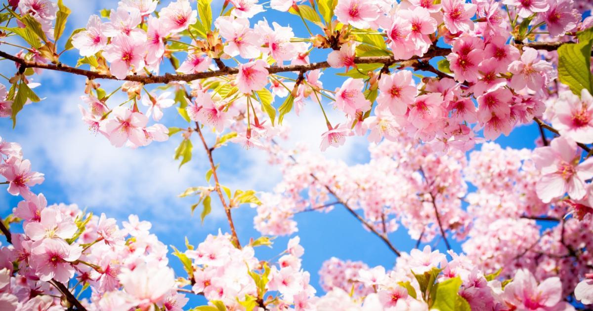 Поздравляем с весенним праздником Навруз!